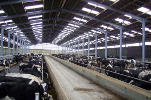 Agricultural Steel Frame Buildings